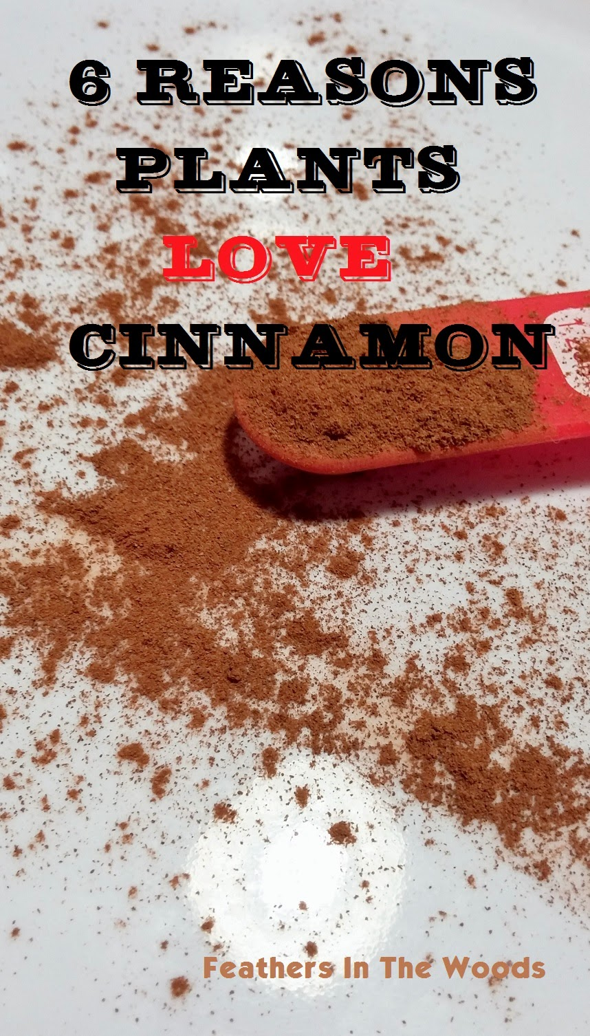 cinnamon for plants and gardening