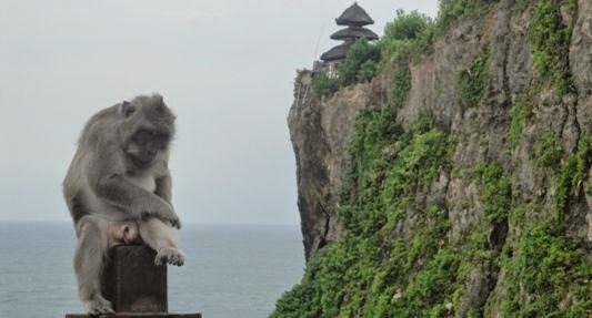 Uluwatu Bali Cliff Temple, Kecak Fire Dance & Monkey Forest - Bali, Trip