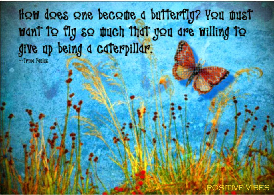 Inspirational And Motivational Quotes About Butterflies Butterfly