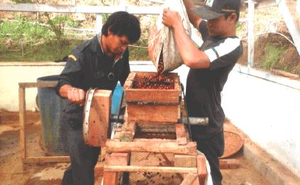 gambar pengupasan kulit buah kopi dengan mesin