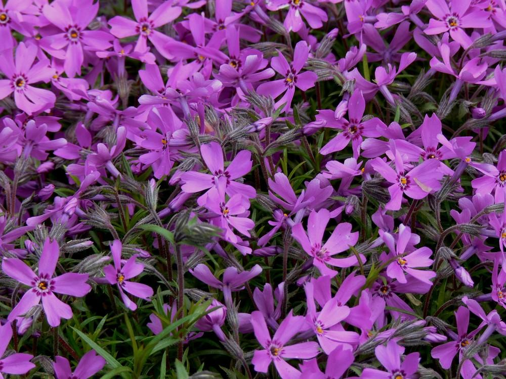 Get Images: Flowers In Purple Color