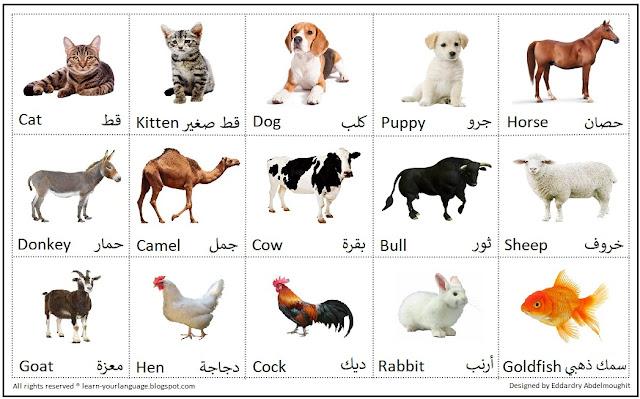Names of animals In English - اسماء الحيوانات بالانجليزي