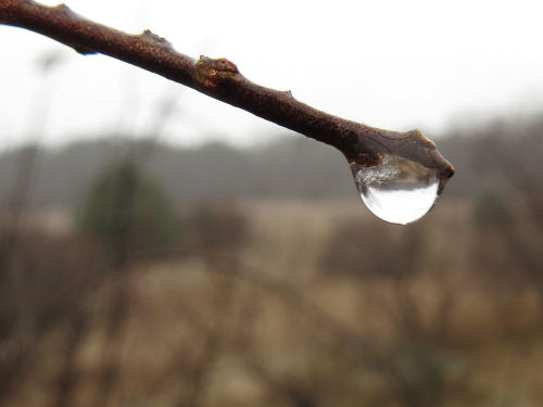 reflection in raindrop