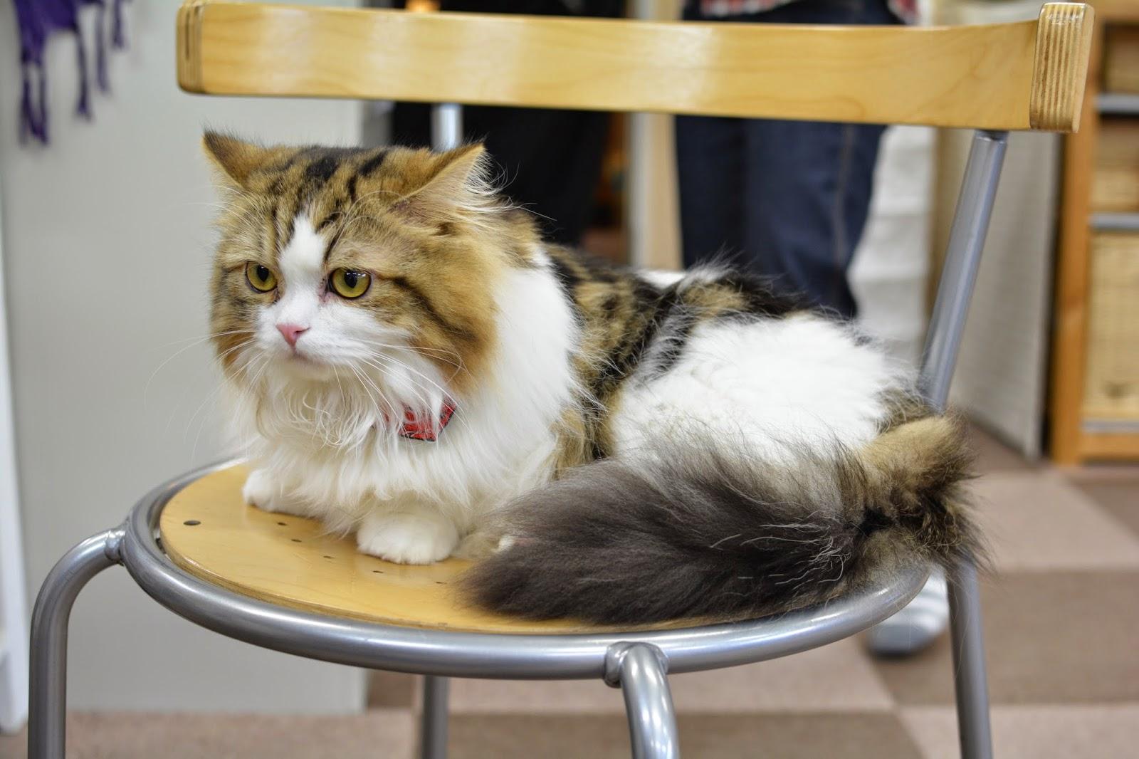 themantisprincess cat cafe