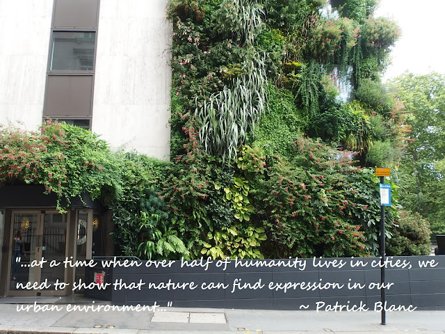 Photo of Patrick Blanc's Living Wall at the Athenaeum Hotel, Piccadilly, London