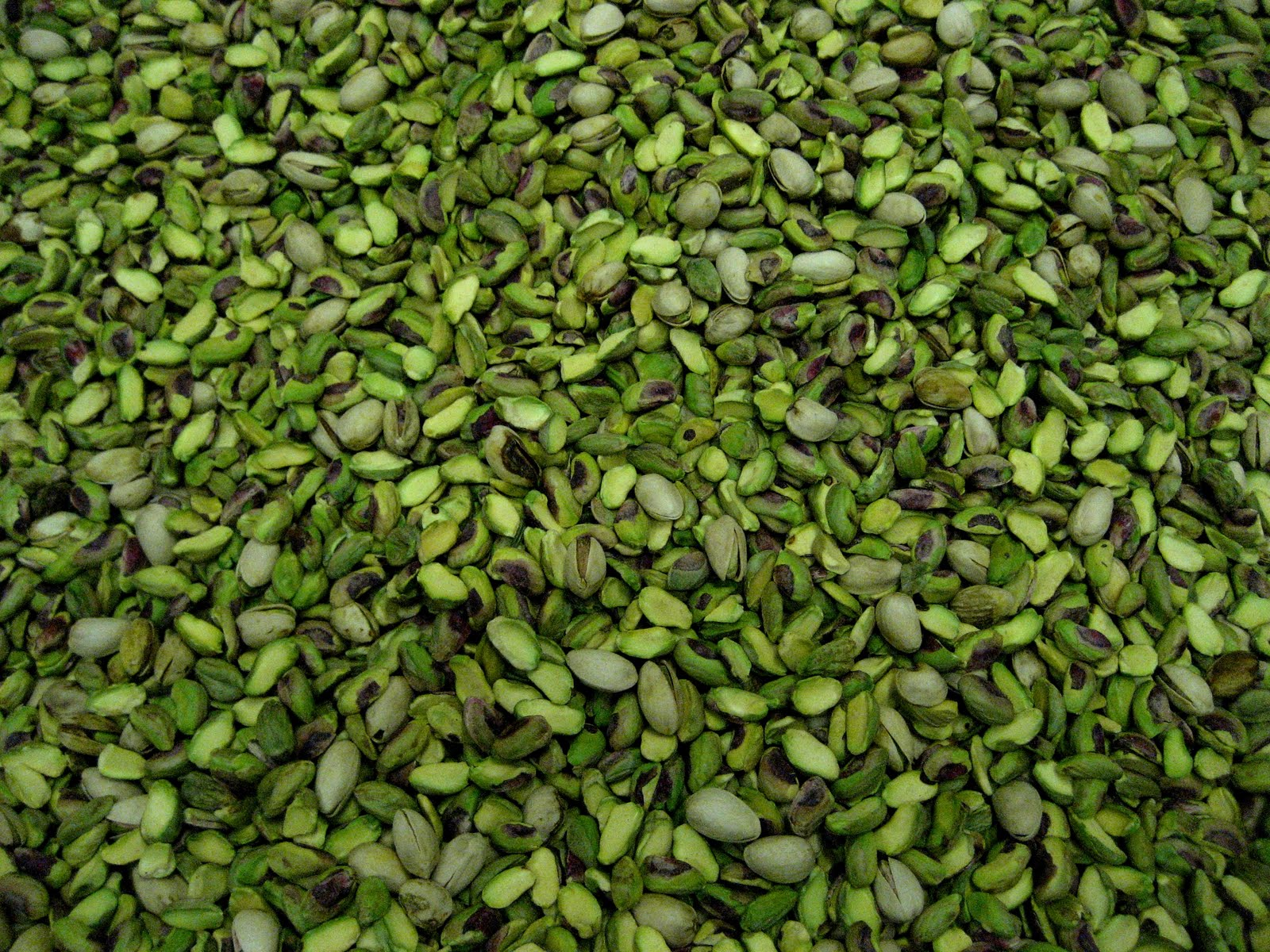 Living Rootless Alamogordo Pistachios and Pecans
