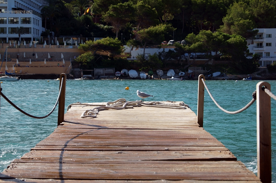 Blog + Fotografie by it's me fim.works - La Isla Blanca Ibiza, Cala Llonga, Möwe auf Anleger