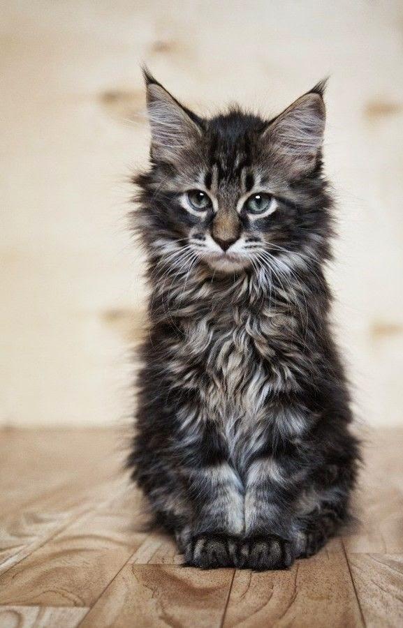 Top 5 Cat Breeds for Children