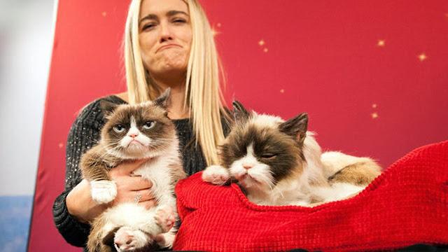 Punya Kucing Muka Cemberut, Wanita Ini Kantongi Rp 9,4 Miliar