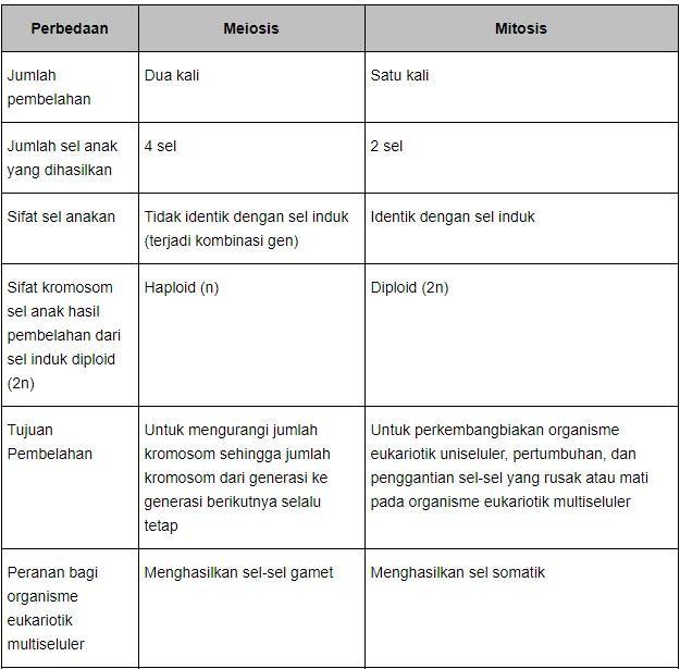 Perbedaan Mitosis Dan Meiosis Secara Lengkap Kata Mutiara