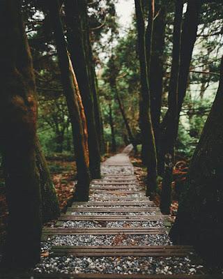 foto de escaleras en bosque