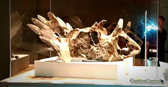Nova espécie de dinossauros com chifres é descoberta pelos cientistas