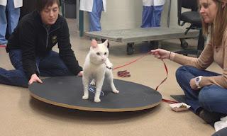 exercício para gatos