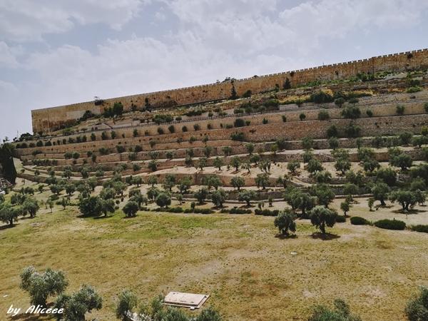 Muntele-Maslinilor-Ierusalim-obiectiv-turistic-am-fost-acolo