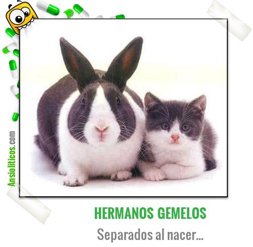 Chiste de Animales: Hermanos Gemelos
