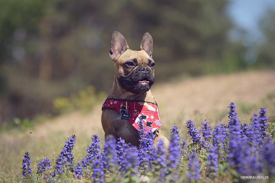 Hundeblog - Genki und Momo im Dossenwald