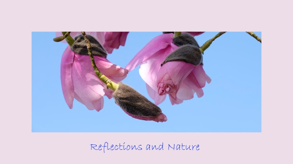 Reflections and Nature