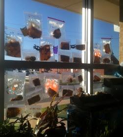 Herding Kats In Kindergarten Pumpkin Fun Freebie