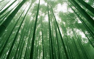Belajar Dari Pohon Bambu