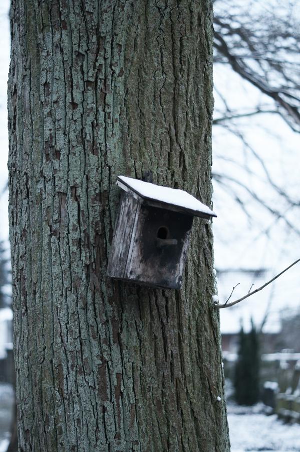 Blog + Fotografie by it's me! - Draussen - Frau Frieda sucht Schnee, Vogelhaus mit Schnehaube am Baumstamm
