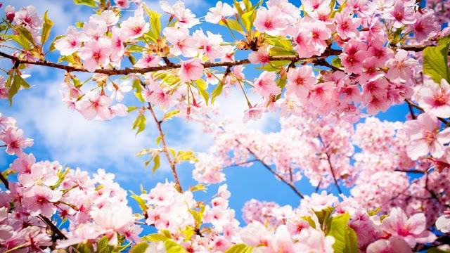 ورود باللون الوردى وضوء الشمس جميل