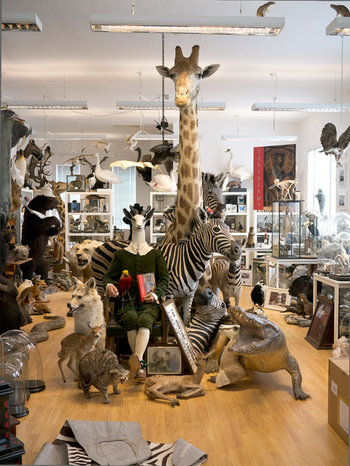 "My Trip to Alexis Turner's London Taxidermy : Guest Post by Joanna Ebenstein, Morbid Anatomy, co-author ""Walter Potter's Curious World of Taxidermy"""