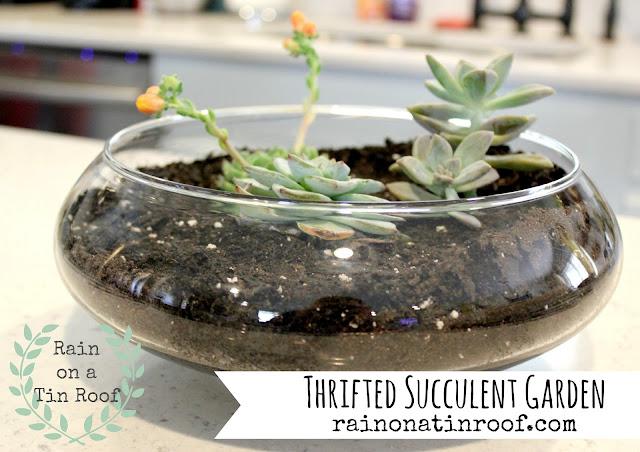 Thrifted Succulent Garden {rainonatinroof.com} #thrift #succulent #garden