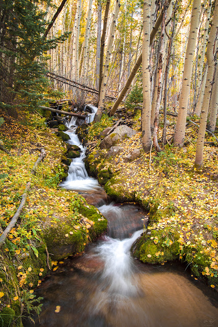 creek with aspen leaves blanketing the ground in autumn photograph of Rocky Mountain National Park, Colorado