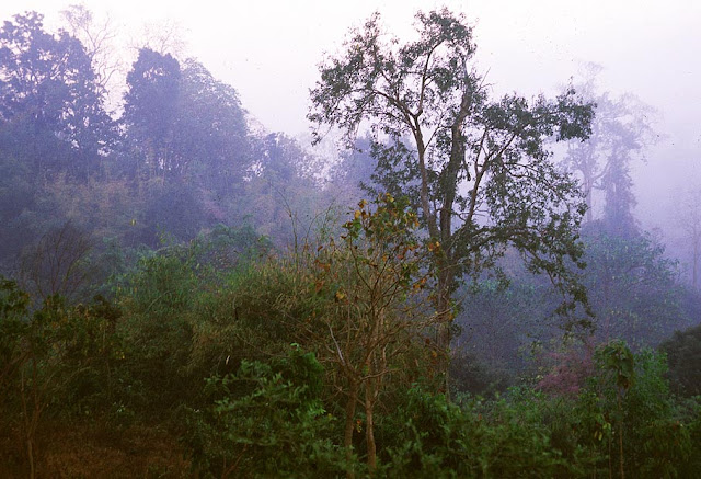 national park forest