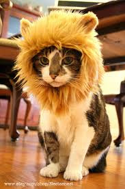 I am the alpha cat the lion in my living room for The lion in the living room netflix