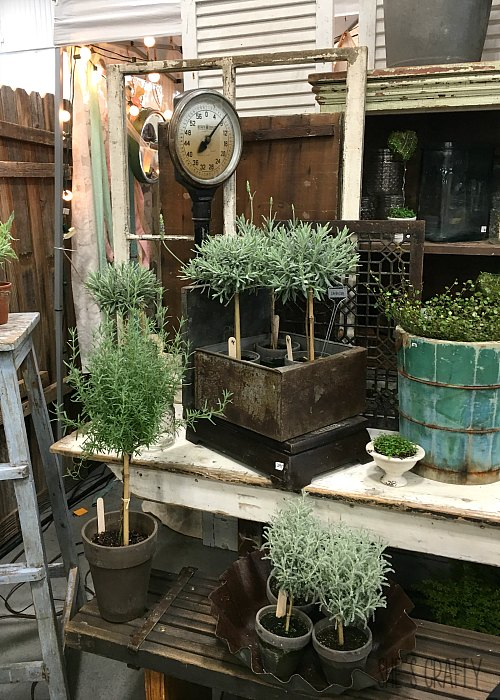 plants, topiaries, vintage junk, vintage container with plants