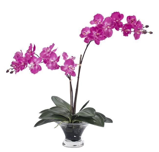varas,ramas,flores,png,follaje,jardines,recursos,