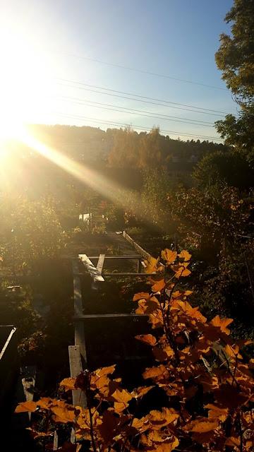 Allotment garden in Oslo (Manglerud)