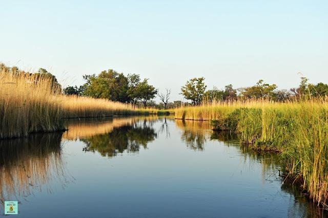 Delta del Okavango, Moremi (Botswana)