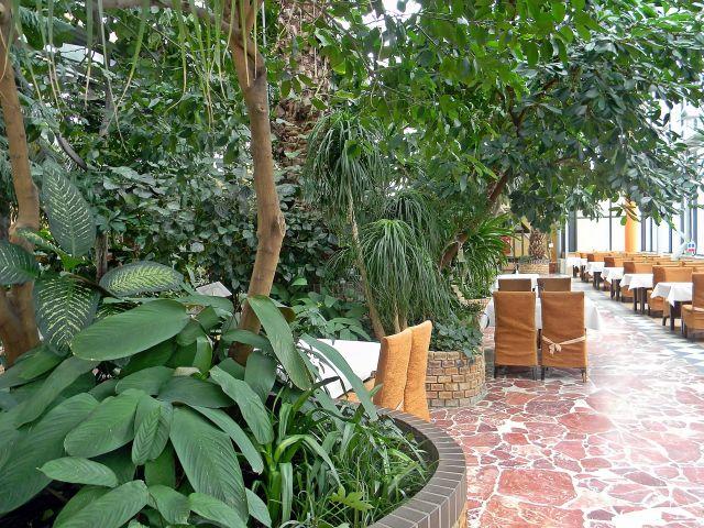 Zielona Góra, drzewa egzotyczne, restauracja, kawiarnia