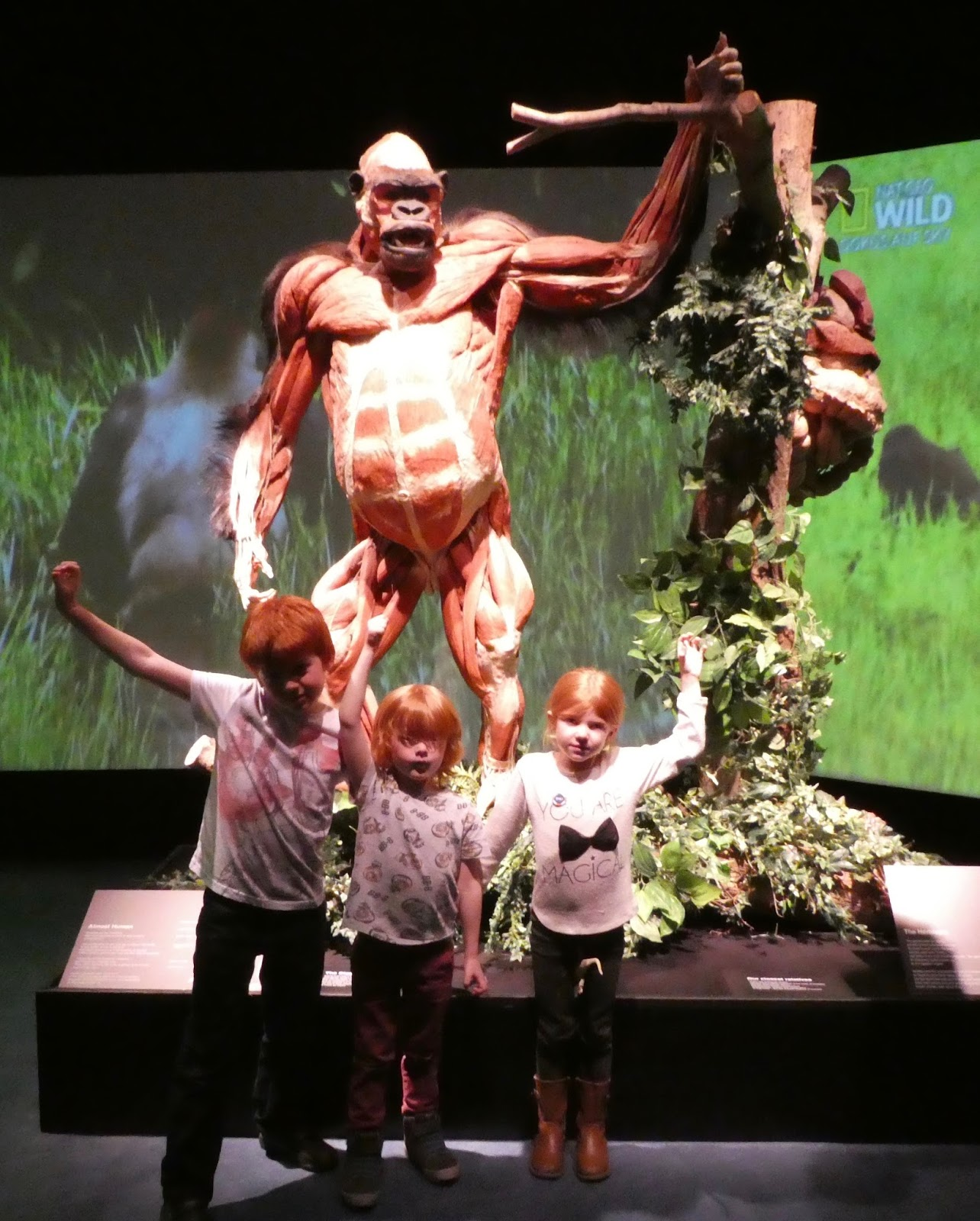 taking your children to see Animal Inside Out at Life Science Centre, Newcastle