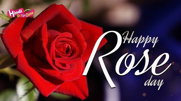 Happy Rose Day HD Pics/Images