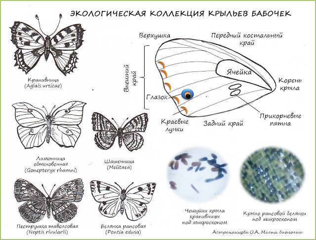 поле-для-скачивания-коллекция-бабочек
