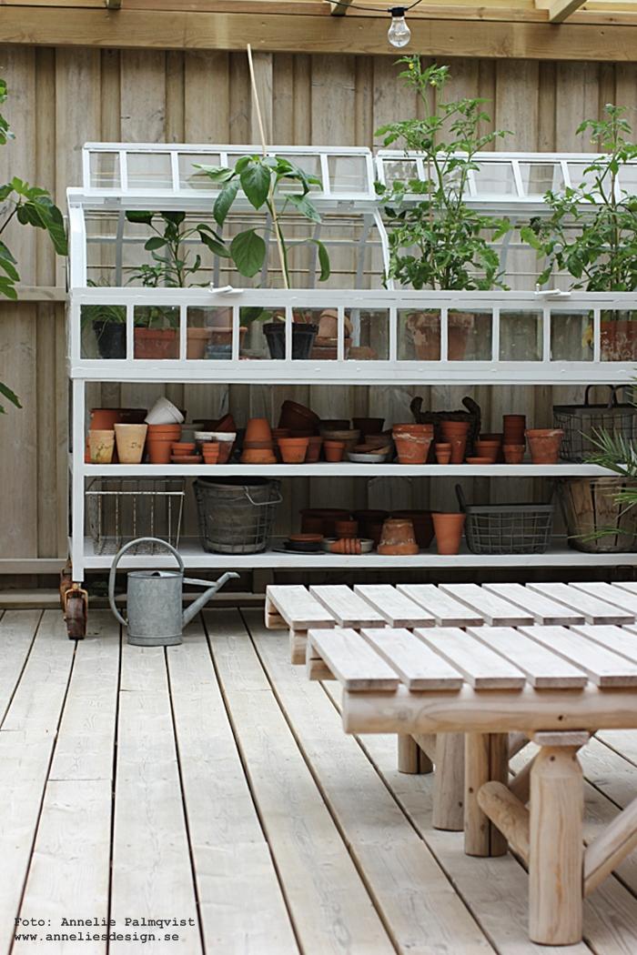 trädäck, uteplats, uteplatsen, altan, altanen, patio, trädgård, trädgården, glas, glastak, säkerhetsglas, exterior, växthus, miniväxthus, industriellt, industristil, industri, metall, tomater, tomatplantor, plantor, växter, grönt, gröna, fikonträd, fikon, solsäng, solsängar,