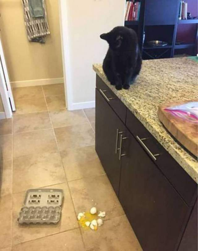Funny cats - part 301, funny cat picture, cat image