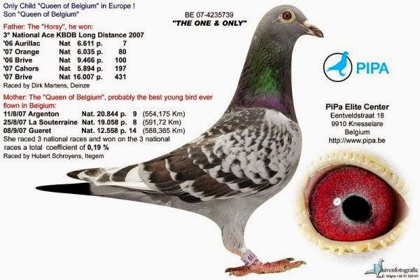racing pigeons nieripigeons rep blica checa presenta a klemens team y lubomir kubacek. Black Bedroom Furniture Sets. Home Design Ideas