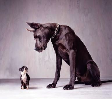 Introducing Your New Dog To Your Old Dogs