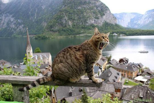 hallstatt austria stunning view