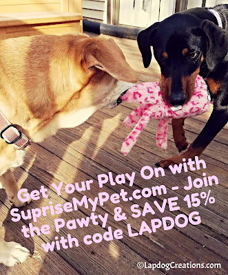 There's nothing like sisterly love and playtime! Get Your Play On with #SurpriseMyPet and SAVE 15% with #coupon code LAPDOG #JoinThePawty #ZippyPaws #FloppyJellyfish #LapdogCreations ©LapdogCreations