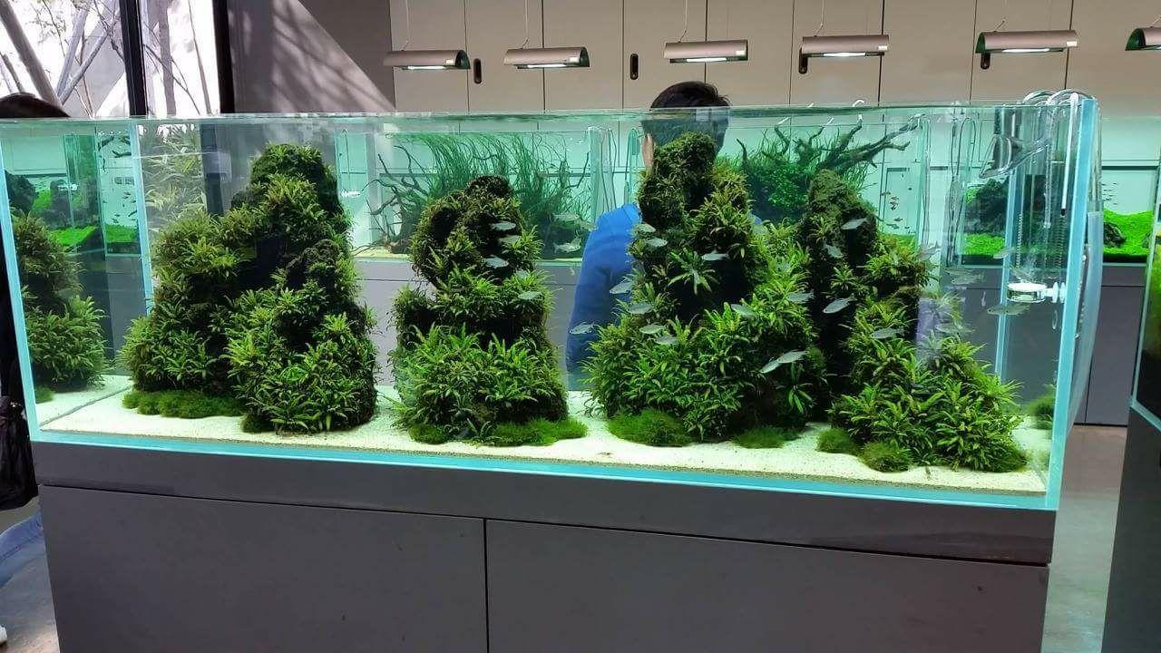 Một bể thủy sinh dùng rất nhiều cây liễu răng cưa