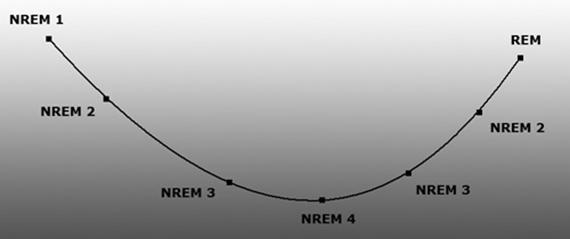 Why Do We Sleep? Modern Theories of Sleep