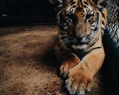Animal Fur Dangerous Zoo