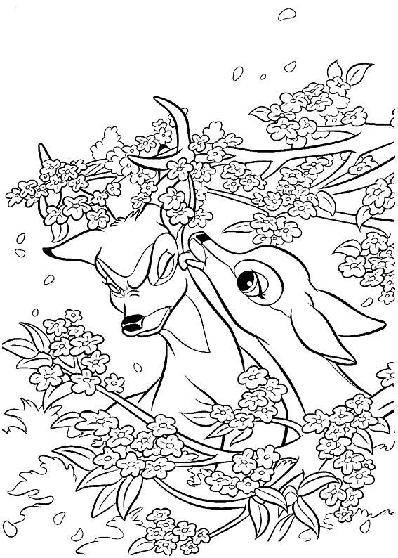 Animale Caprioare Planse De Colorat P11