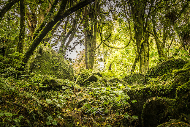 Lush Middle-Earth forest, NZ