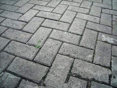 membersihkan-paving-block